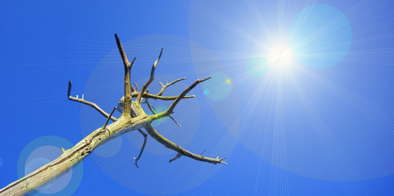 Verdorrter Baum - Verdorrter Baum - © Pixabay