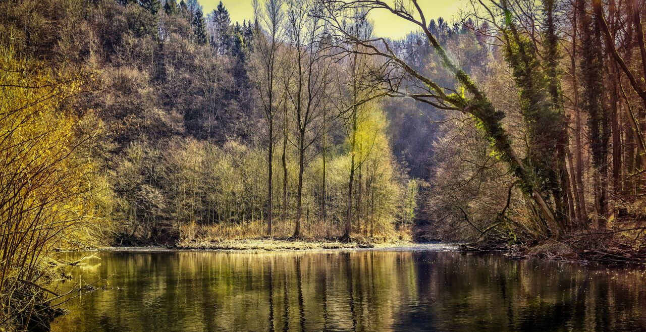 Wald - © Foto: Pixabay