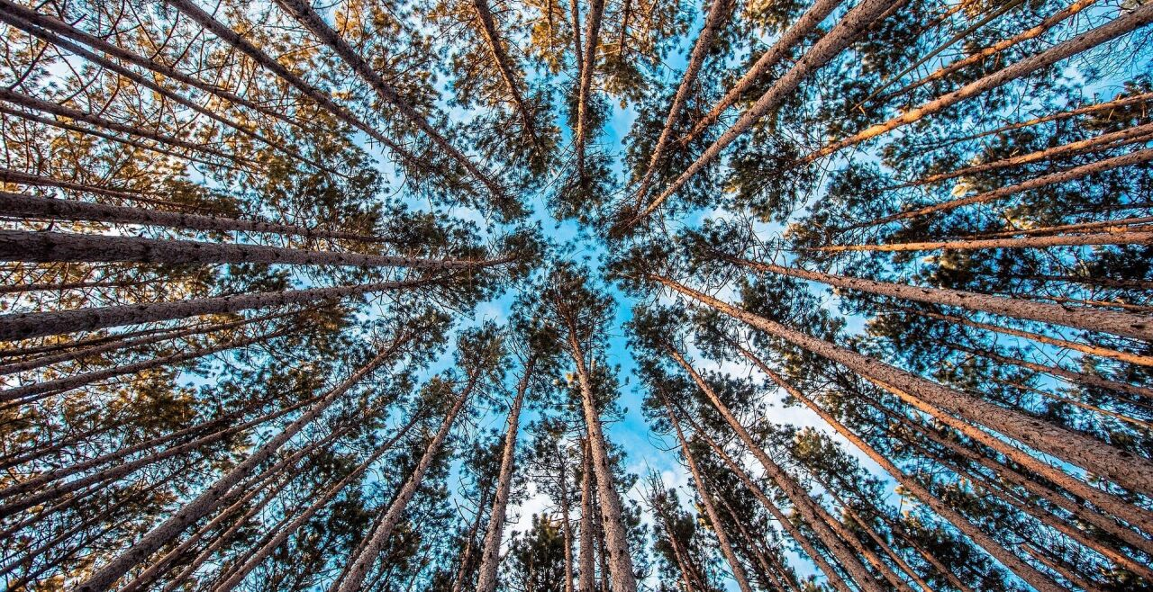 Wald Wachstum - © Pixabay