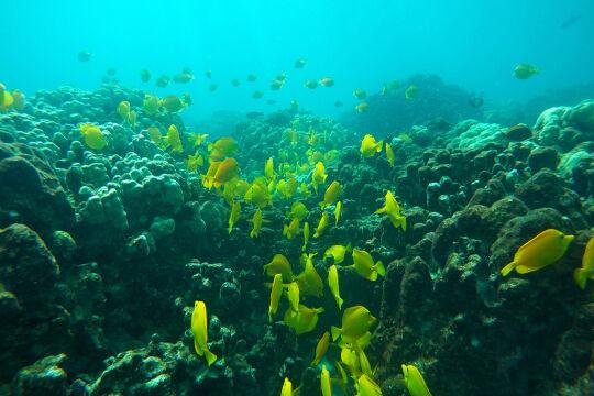 Versauerung - Die Auswirkungen der Übersäuerung des Meerwassers kann man bereits heute beobachten. Sie treffen ein Korallenriff umso schwerer, wenn es weiteren Stressfaktoren wie zum Beispiel Verschmutzung ausgesetzt ist. - © Foto: picturedesk.com / AP Photo / Brian Skoloff