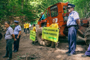 Proteste im Urwald - Proteste im Urwald - © Foto: Cristian Grecu / Greenpeace