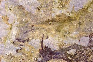 Urzeitliche Jagdmalerei - Die Wandmalereien wurden in der Kalksteinhöhle Leang Bulu Sipong 4 im Süden der Insel Sulawesi gefunden. Die Forscher nutzten die Uran-Thorium-Datierung, um das Alter festzustellen. - © Foto: APA / AFP / Griffith University / Ratno Sardi