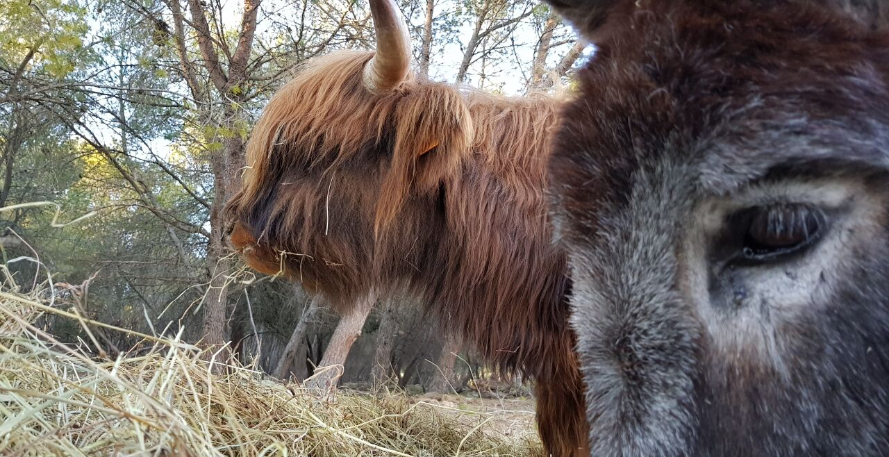 Ochs und Esel
