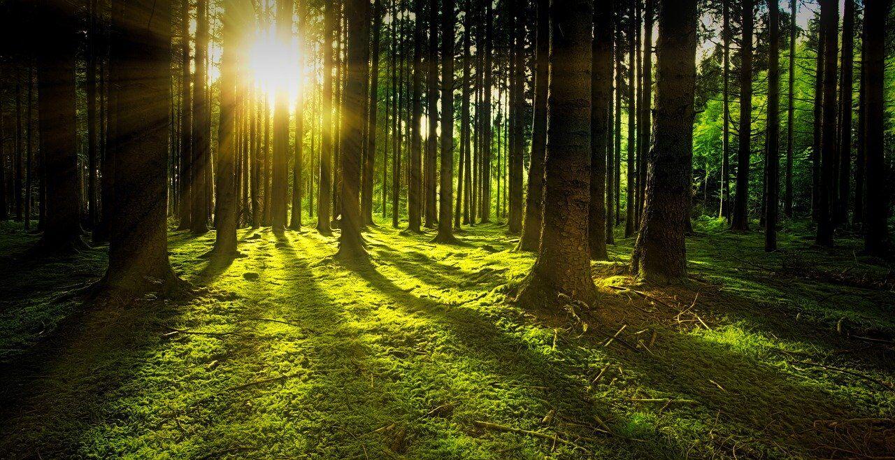 Baumkraft, Bäume, Wald - © Pixabay