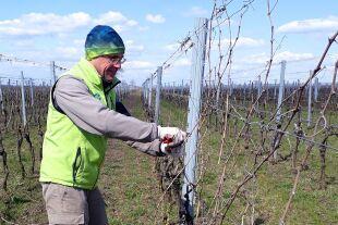 Wein Covid Landwirtschaft - © Foto: Wolfgang Machreich