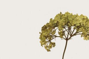 Pflanzen - © Collage: Rainer Messerklinger