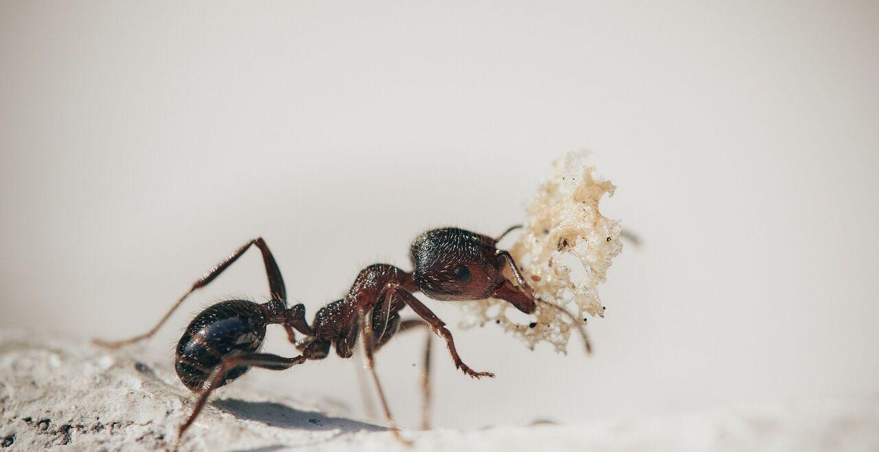 Ameisen - © Foto: Pixabay