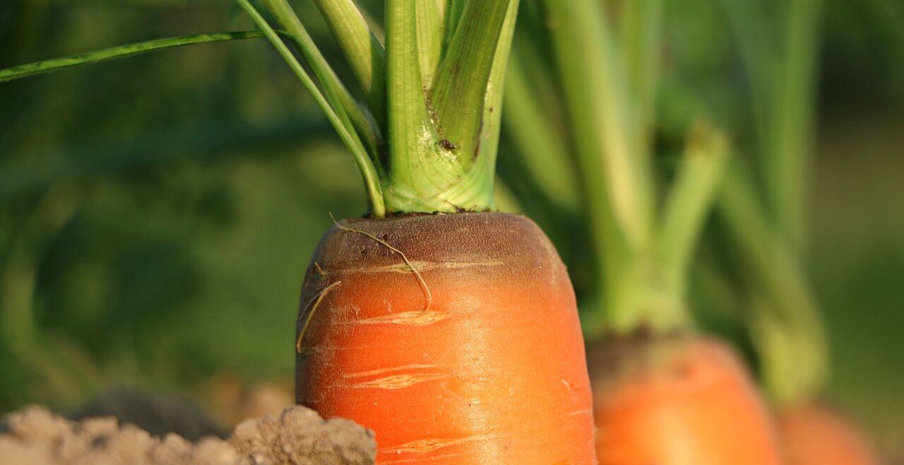 Karotten - © Foto: Pixabay