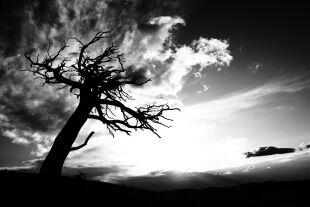 Baum - © Foto: iStock/ImagineGolf (Bildbearbeitung: Florian Zwickl)