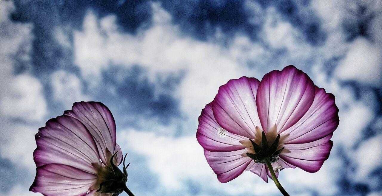 Semier Insayif  - © Foto: unsplash/KS KYUNG