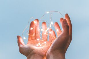 Transplantation - © Foto: Unsplash/Diego PH