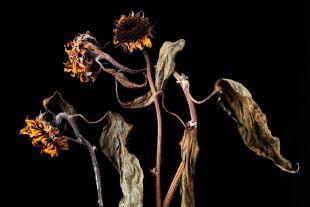 Natura morta - © Foto: iStock /kyoshino