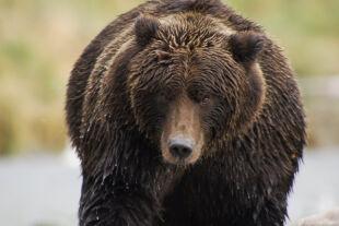 Der Bär in mir - © Foto: Pandafilm