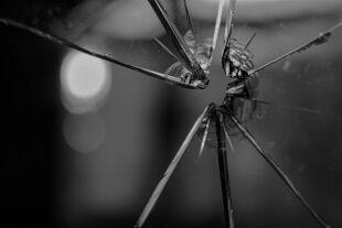 Anschlag Terror - © Foto: Pixabay