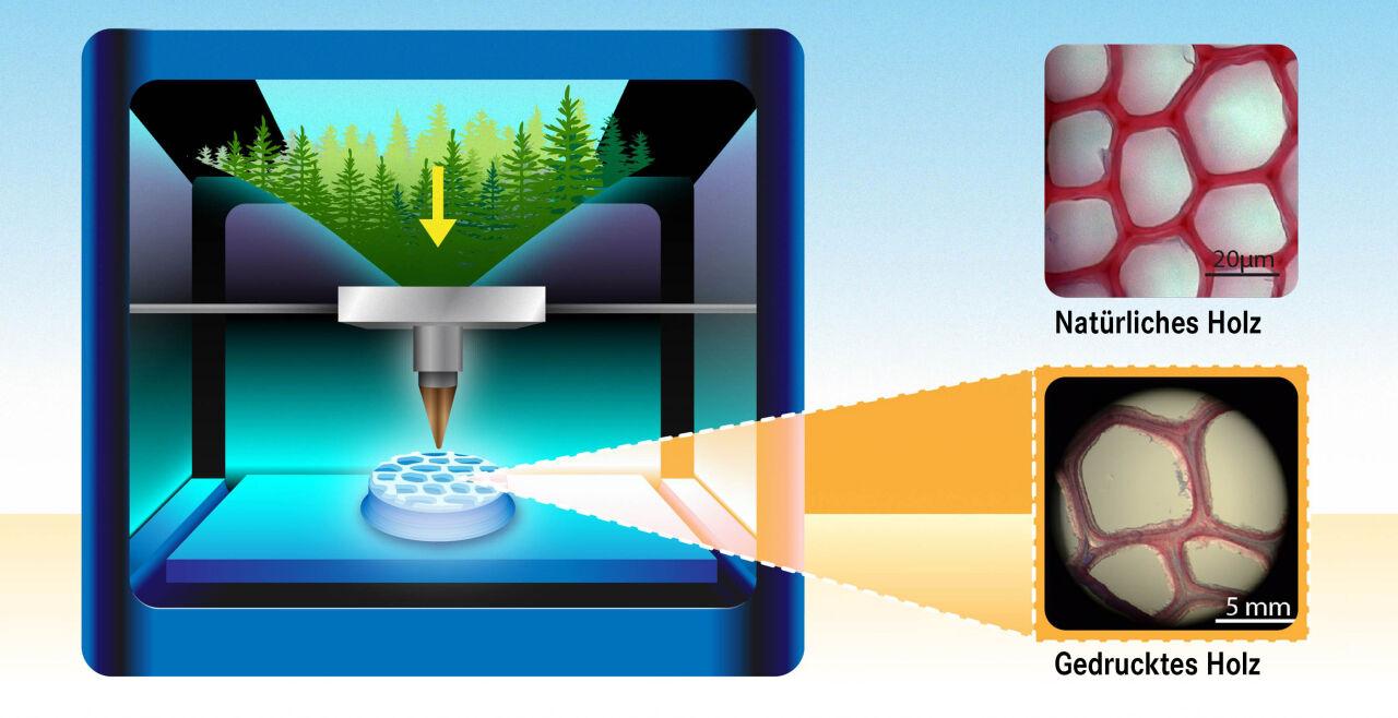 """Holzstruktur - Die mikroskopischen Bilder zeigen, wie die schwedischen Forscher die zelluläre """"Architektur"""" des echten Holzes im 3D-Druck nachahmen konnten. - © Yen Strandqvist / Chalmers University of Technology"""