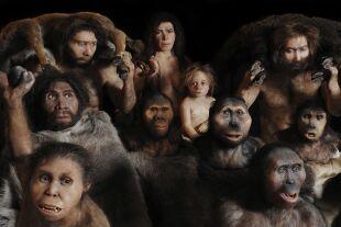 Menschenarten  - © Philippe Plailly