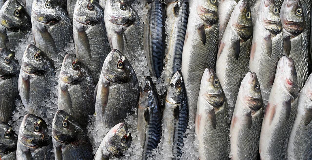 Fisch - © Foto: iStock/vision4ry-l4ngu4ge