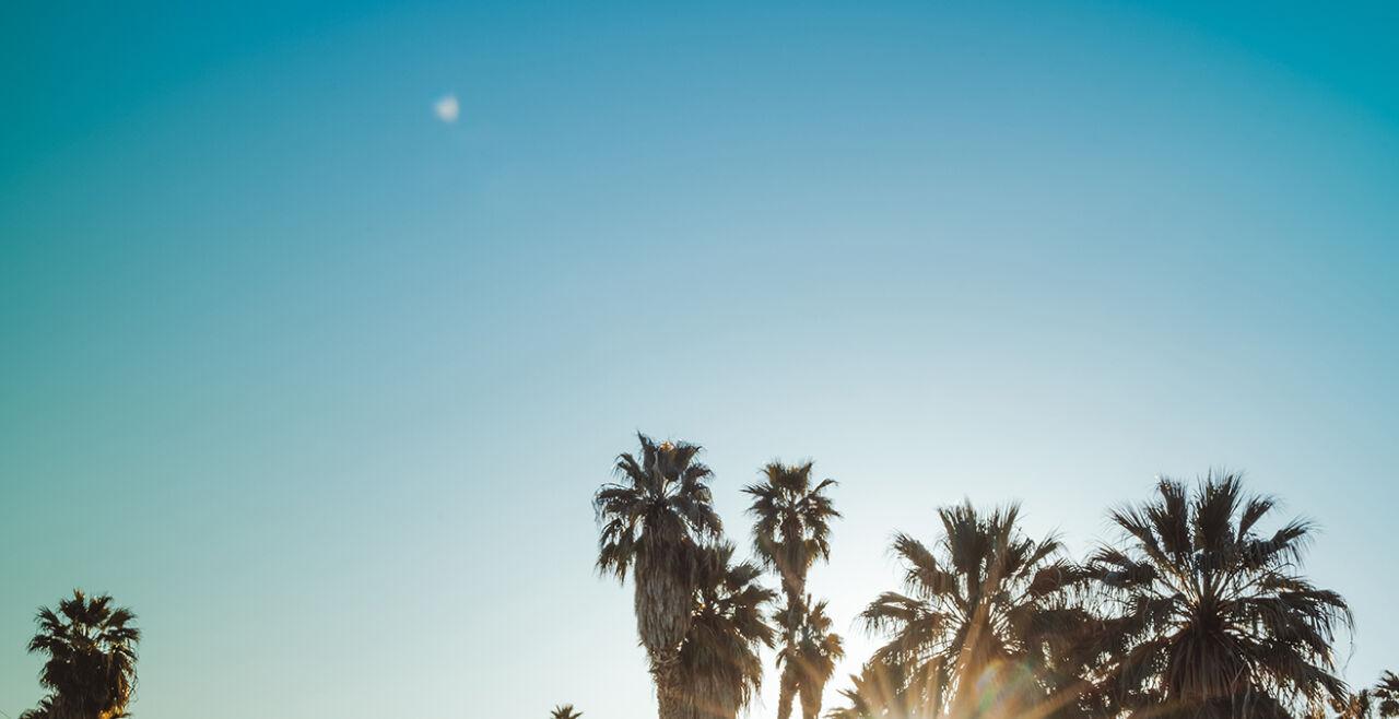 Lyrik unter Palmen - © iStock / Wildroze