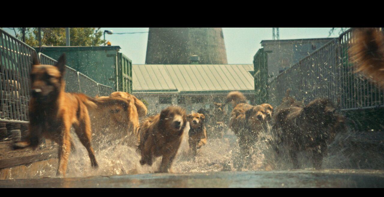 underdog - © Thimfilm