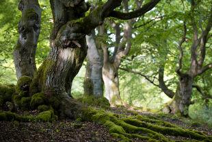 Wald - © Foto: iStock/digital_eye