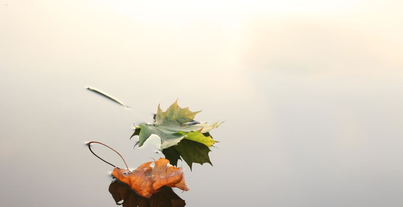 Blätter - © Foto: Pixabay