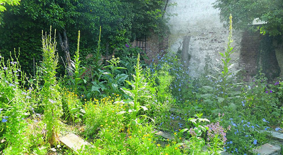 Gemüse & Co - Freifläche mit Gemüse und Wildpflanzen