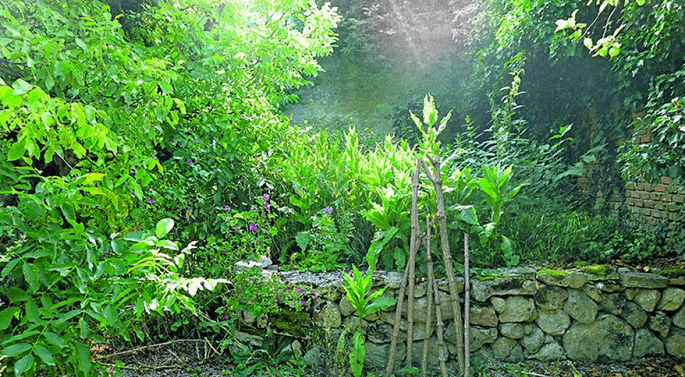 Steinmauer - Trockensteinmauer und Schotterfläche als zusätzlicher Lebensraum für Tiere