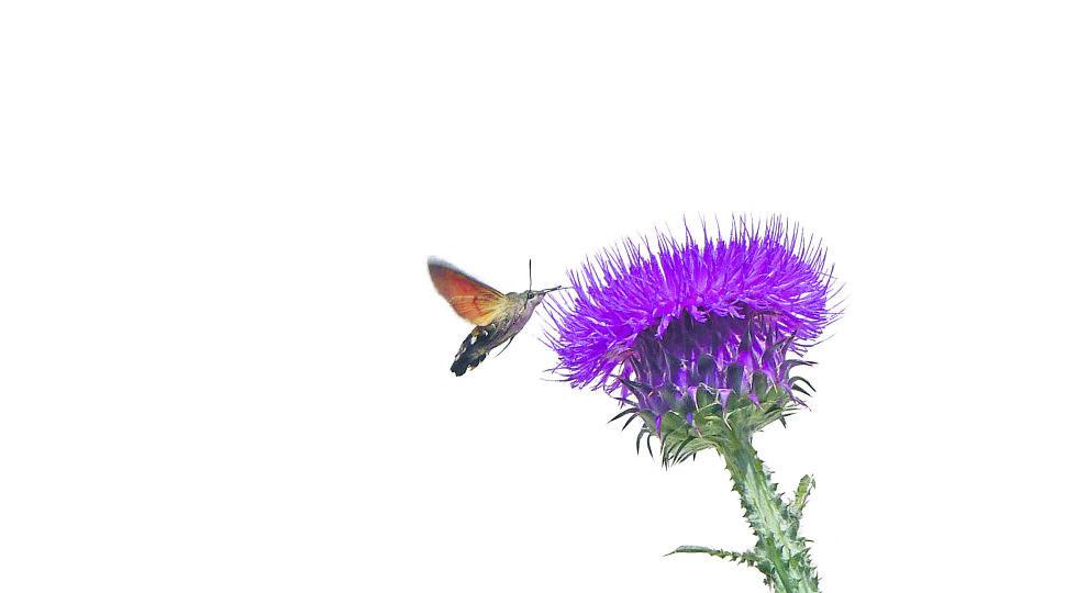 Blüten - Blüten als Attraktion für Insekten - © Foto: Paul Neuninger
