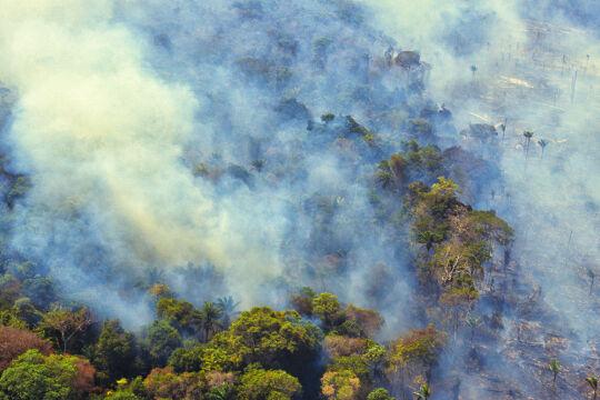 Urwald Amazonas - © Foto: iStock/Brasil2