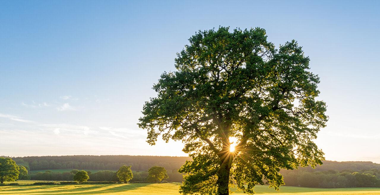 Baum - © Foto: iStock/ChrisHepburn