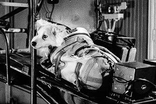 """""""Space Dogs"""" - © Rainer Messerklinger"""