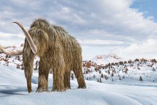 Mammut - © Foto: iStock/leonello