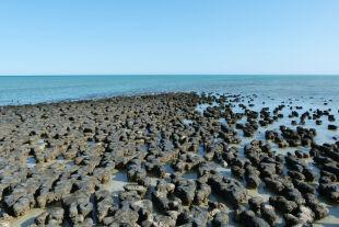 Australien Shark Bay Mikroben Stromatolithen - © Foto: Sebastian Viehmann